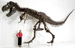 Life-Sized Tyrannosaurus Rex
