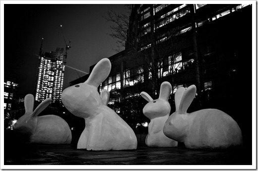 London Giant Rabbits