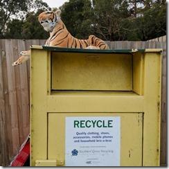 Abandoned Tiger